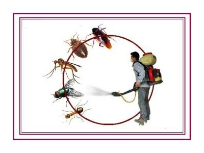 物业虫害治理解决方案